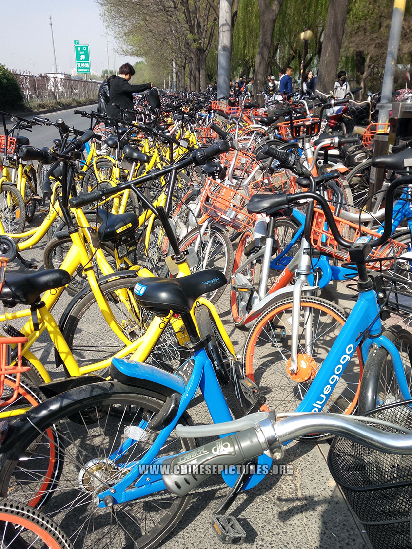 China Dockless Shared Bicycles Clogged Beijing Sidewalk