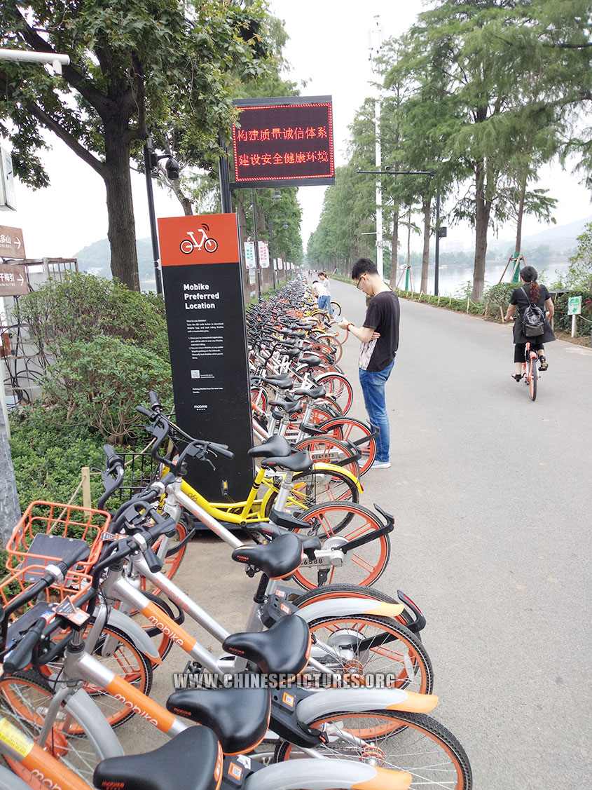 Wuhan Dock-less Shared Bicycles Photo